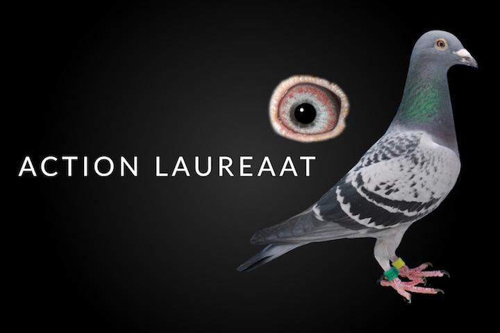 J P S  Lofts | Quality Racing Pigeons for Sale